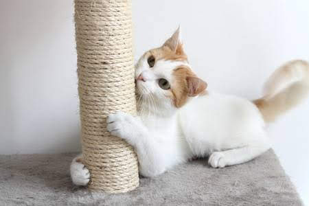 A cat scratching a rope post